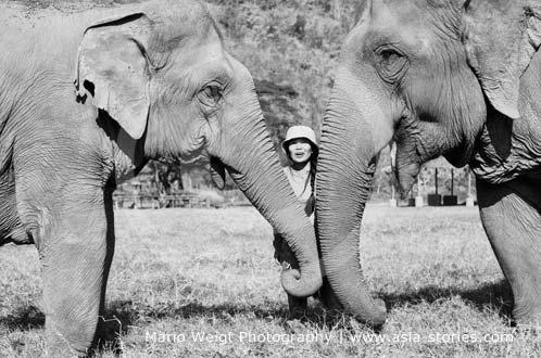 Sangduen Lek Chailert zwischen ihren Elefanten im Elephant Nature Park (Elefantenpark) in Thailand | Mario Weigt Photography