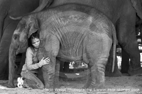 Sangduen Lek Thailand, Elephant Nature Park: Chailert liebt ihre Elefanten | Foto Mario Weigt