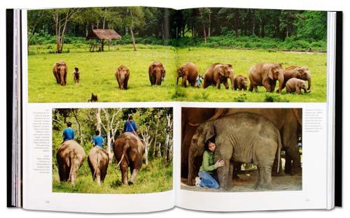 Sangduen Lek Chailert und ihre Elefanten im Elephant Nature Park | Doppelseite im Premium Bildband Südostasien