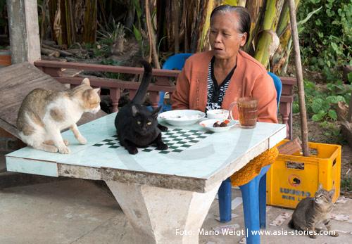 Reisetipp für Laos: Hygiene und Gesundheit | Nicht zu empfehlen: Mittagessen mit Katzen in Champassak | Foto: Mario Weigt
