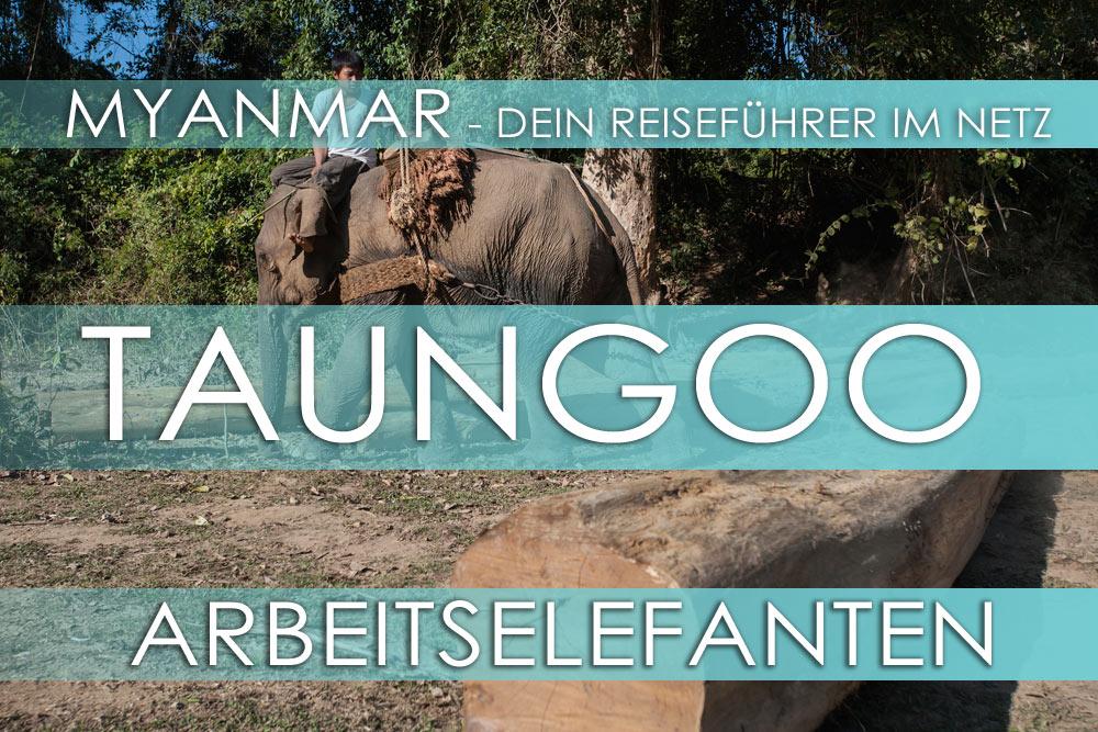 Myanmar - Taungoo | Arbeitselefanten