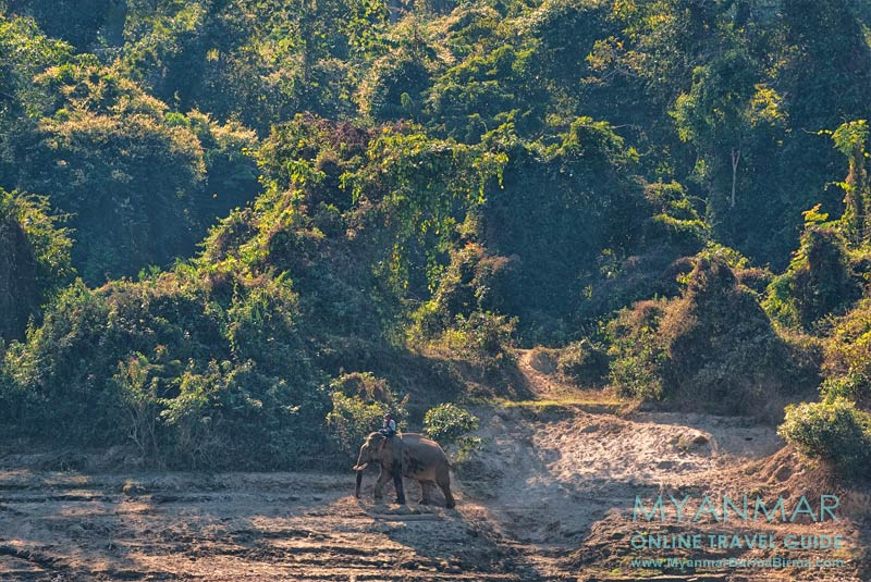 Myanmar Reisetipps | Kalaw | Tour mit Mr. Dr. Chan Aye zum Elefantencamp