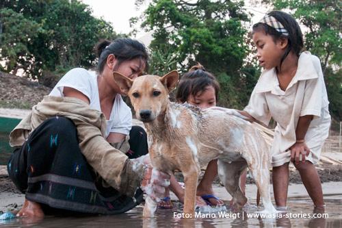 Reisetipp für Laos: Tollwut und Gesundheit | Nicht überall sind die Hunde so friedlich wie hier bei der Morgenwäsche | Foto: Mario Weigt
