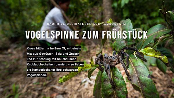 Reportage: Frittierte Vogelspinnen zum Frühstück im Magazin für Reportagen SIEH DIE WELT von Mario Weigt | www.asia-stories.com