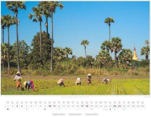 Monatsblatt September vom Kalender 2016 MYANMAR | BURMA | Frauen beim Stecken junger Reispflanzen bei Inwa | Foto von Mario Weigt | Verlagshaus Würzburg / Stürtz | Größe 60 x 48 cm | Preis: 27,95 Euro
