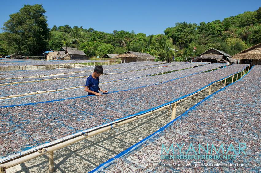 Myanmar Reisetipps - Dawei Peninsula | Fischtrocknung im Dorf Paw La Mor, nahe dem Strand Tizit
