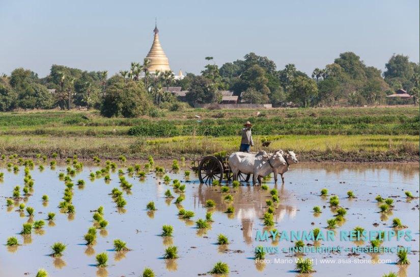 Myanmar Reisetipps   Umgebung von Mandalay   Inwa