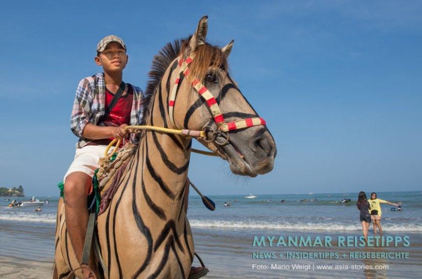 Myanmar Reisetipps | Chaungtha Beach | Zebra oder Pferd? | Umstrittene Animation am Strand