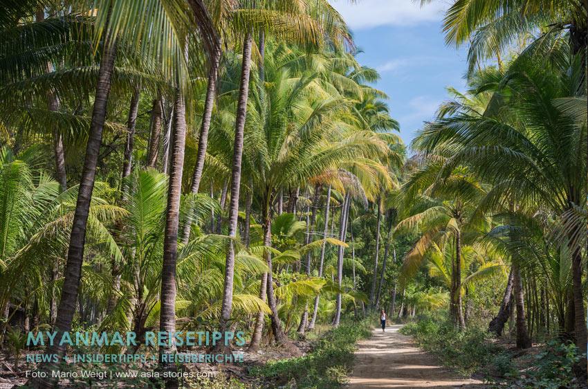 Myanmar Reisetipps | Palmenhain zwischen Ngwe Saung und Chaungtha Beach