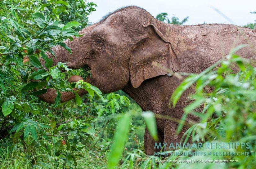Myanmar Reisetipps   Ausflug vom Ngapali Beach zum Elefantencamp