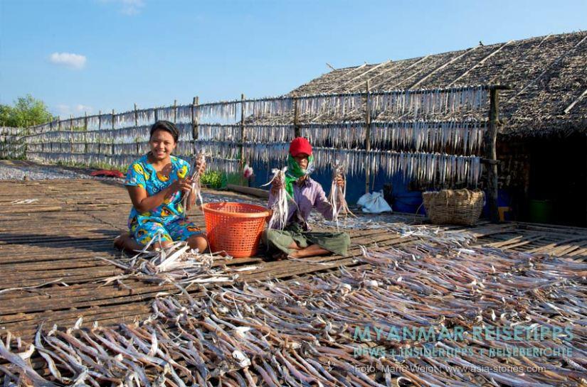 Myanmar Reisetipps | Stadt Ye und die Umgebung | Fischtrocknung
