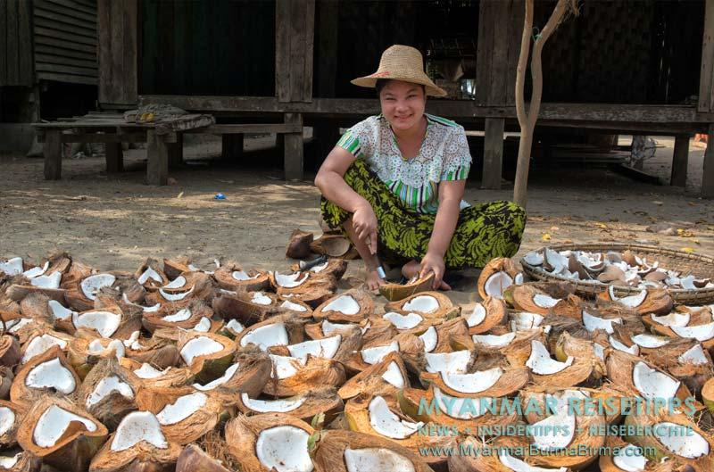 Myanmar Reisetipps   Ngwe Saung Beach (Silberstrand)   Kokosnüsse sind der Exportschlager in Sinma