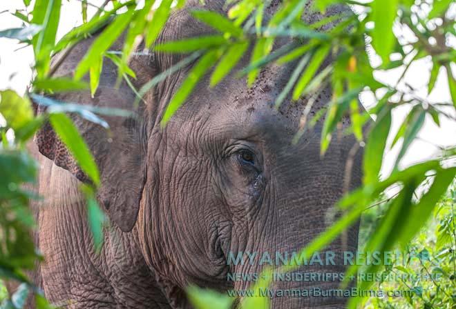 Myanmar Reisetipps   Ngwe Saung Beach (Silberstrand)   Elefantencamp zwischen Ngwe Saung und Pathein