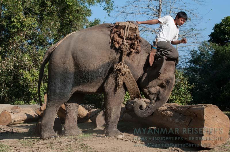 Myanmar Reisetipps | Bhamo | Arbeitselefant mit Mahout (Oozie)