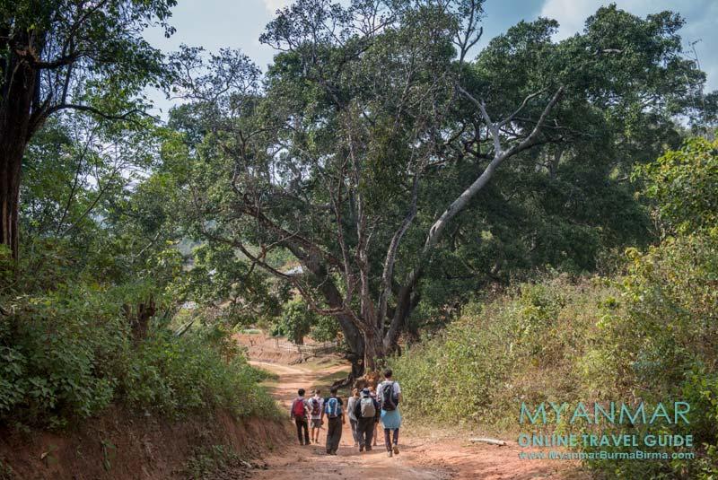 Myanmar Reisetipps | Hsipaw | Trekking nach Pankam