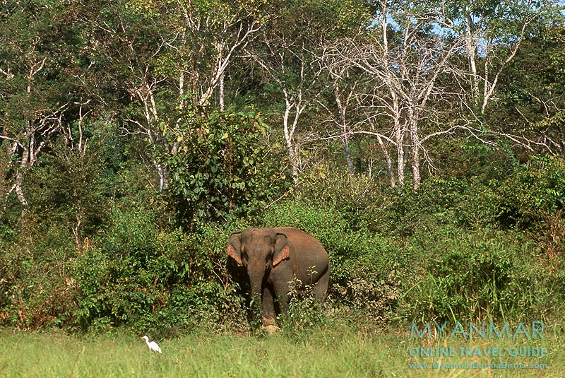 Myanmar Reisetipps | Kalaw | Green Hill Valley Elephant Camp