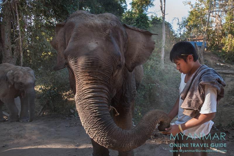 Myanmar Reisetipps | Toungoo | Tour mit Mr. Dr. Chan Aye zum Elefantencamp