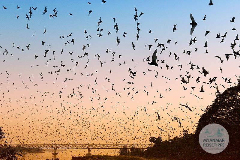 Myanmar Reisetipps | Hpa-an | Fledermaushöhle