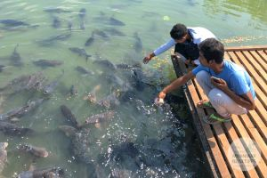 Myanmar Reisetipps | Hpa-an | Fische füttern am Kyauk Ka Lat