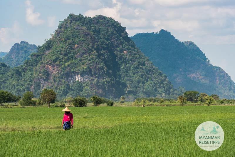 Myanmar Reisetipps | Hpa-an | Reisfeld nahe der Saddar-Höhle