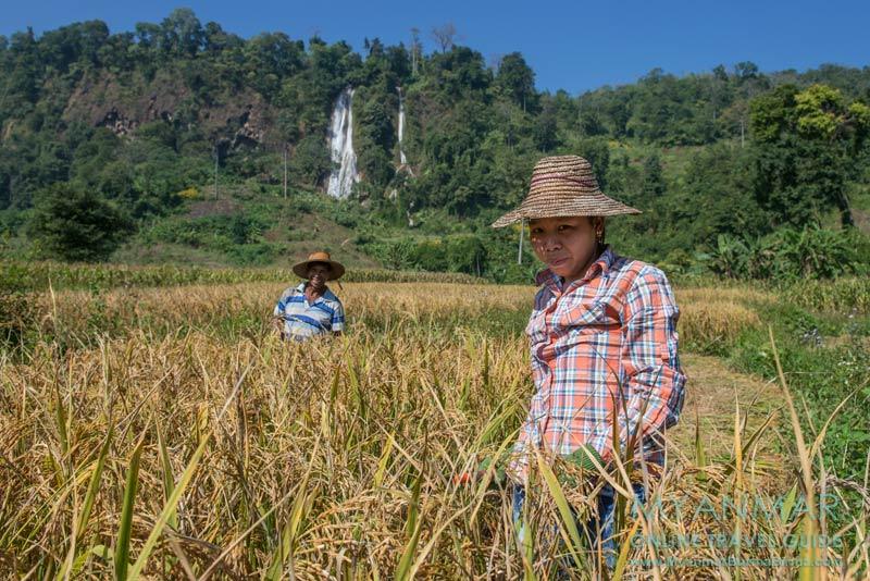 Myanmar Reisetipps | Hsipaw | Wanderung mit Jo Jo zum Wasserfall Nam Tok