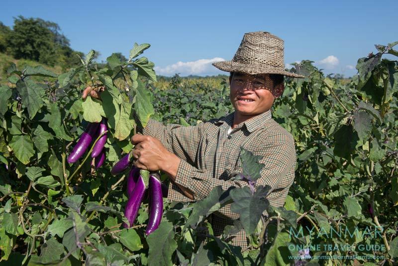 Myanmar Reisetipps | Hsipaw | Auf dem Weg zum Wasserfall Nam Tok