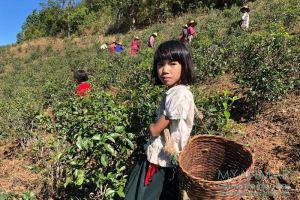 Myanmar Reisetipps   Kalaw   Teeplantage mit der Palaung-Ethnie
