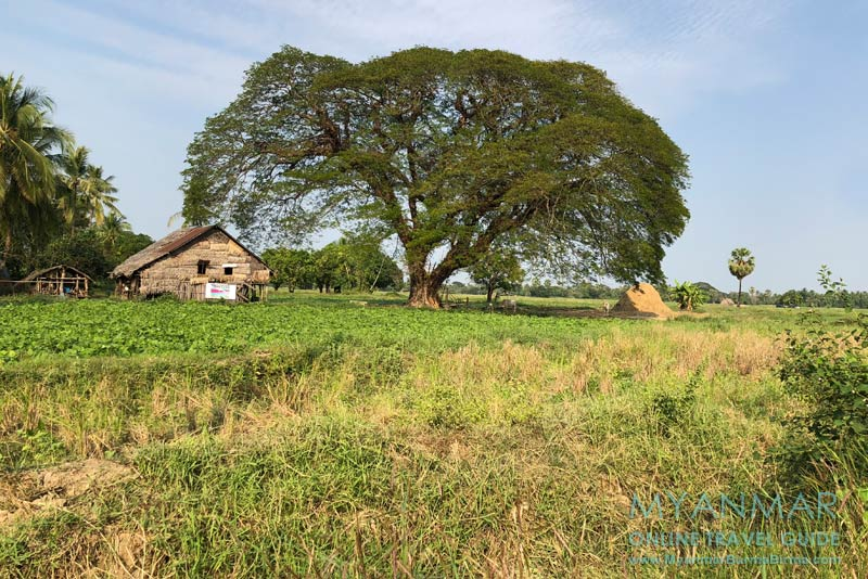Myanmar Reisetipps | Insel Bilu Kyun | Gemüsefelder