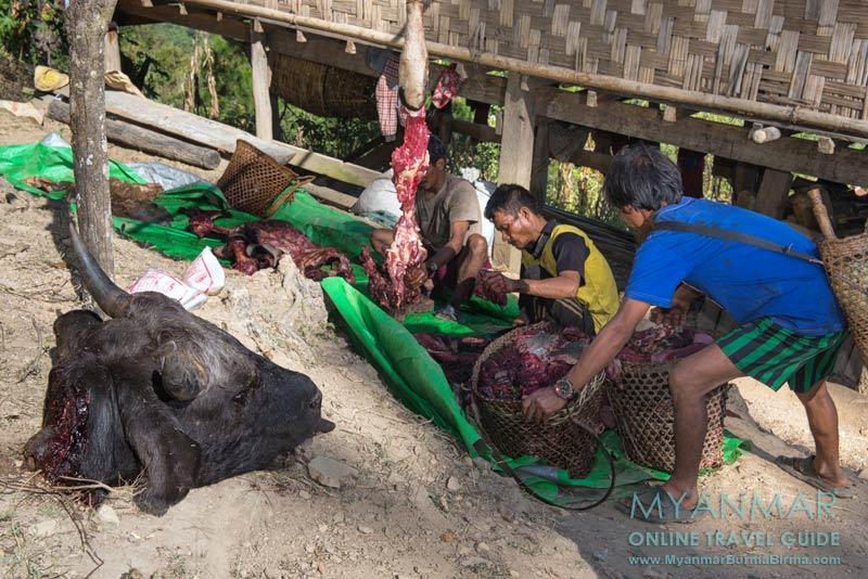 Myanmar Reisetipps | Mindat | Schlachtung eines Mithun