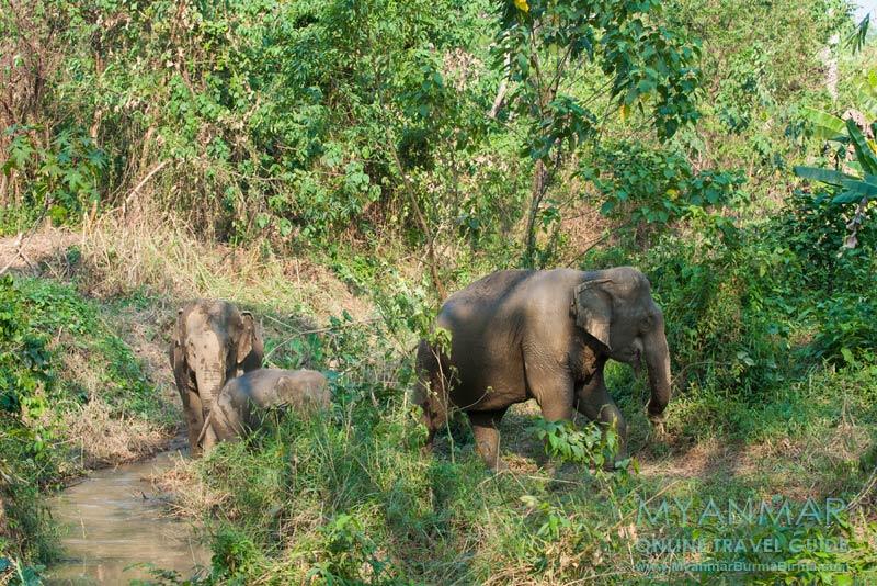 Myanmar Reisetipps | Umgebung von Kalaw | Green Hill Valley Elephant Camp