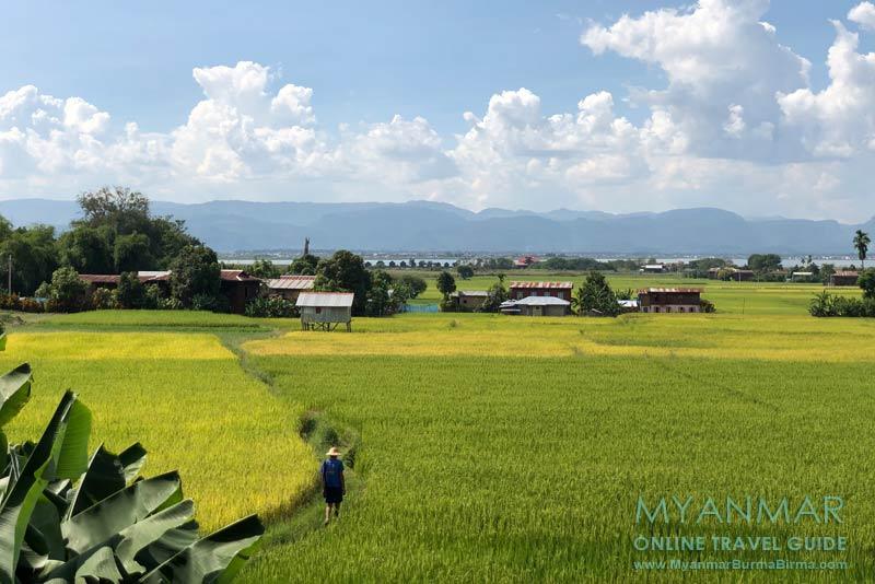 Myanmar Reisetipps | Inle-See | Reisfelder an der Inle Lake East Corridor Road