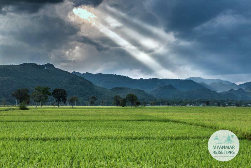 Myanmar Reisetipps | Loikaw | Reisfelder nahe Berg Sin Ma Taung