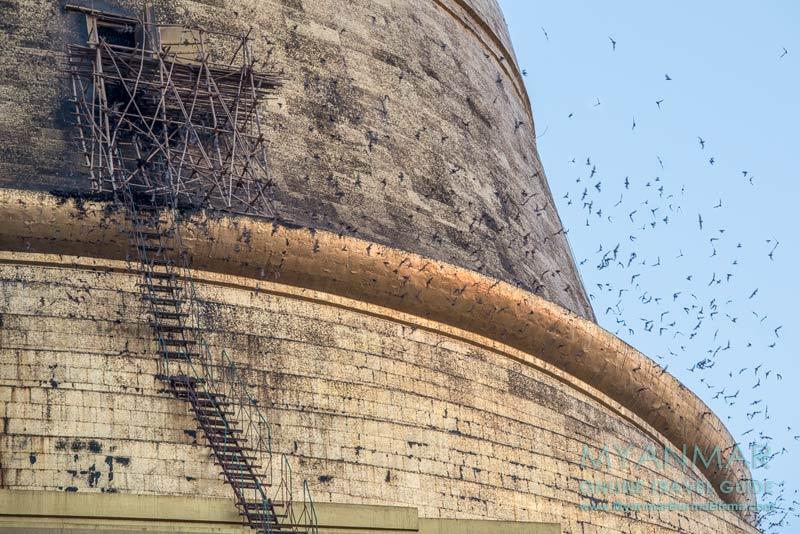 Myanmar Reisetipps | Bago | Fledermäuse in der Shwemawdaw-Pagode