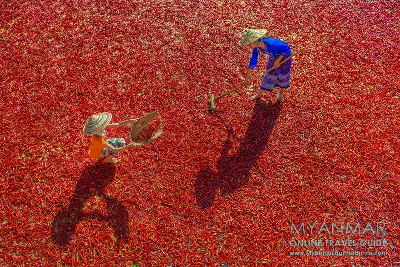 Myanmar: In der trockenzeit wird zwischen Kalaw und Loikaw überall Chili getrocknet.