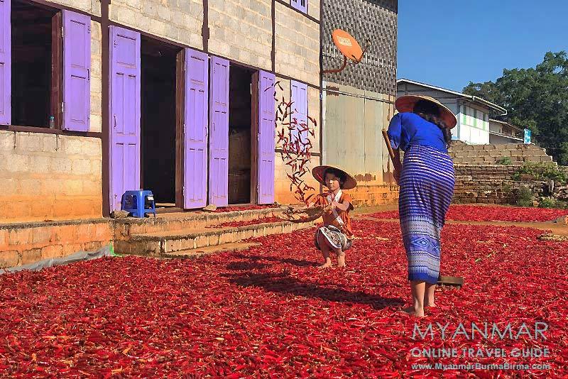 Myanmar Reisetipps | Umgebung von Kalaw | Chilitrocknung