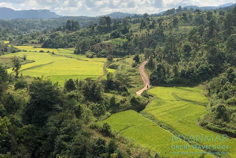 Myanmar Reisetipps | Umgebung von Kalaw | Reisfelder bei Myin Daik