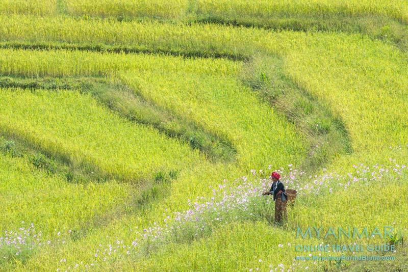 Tipps für Myanmar: Tour mit dem Motorbike rund um Kalaw