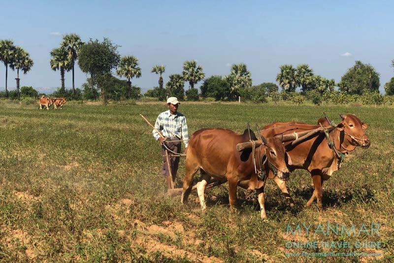 Myanmar Reisetipps | Sale | Harte Feldarbeit an der Straße nach Süden