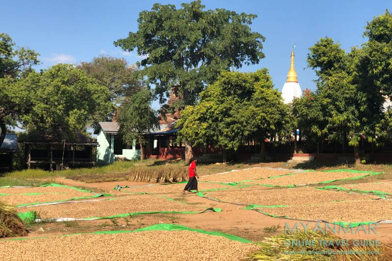 Myanmar Reisetipps | Sale | Erdnusstrocknung hinter der Pagode Shin Bin Ngar Man Aung