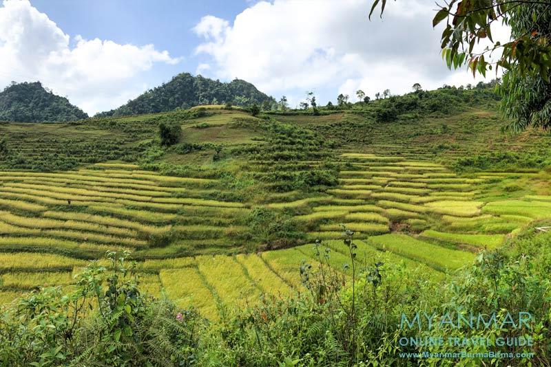 Myanmar Reisetipps | Pinlaung | Reisterrassen auf dem Weg zur Pagode Lone Naga Pat