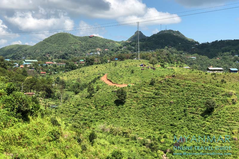 Myanmar Reisetipps | Thandaunggyi | Teeplantagen kurz vor dem Bergdorf