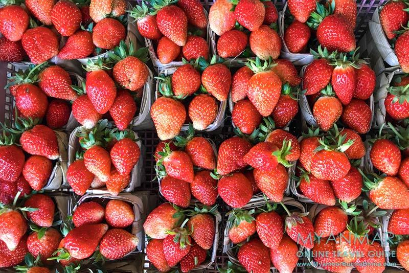 Myanmar Reisetipps | Pyin U Lwin | Erdbeerverkauf am Myoma-Markt